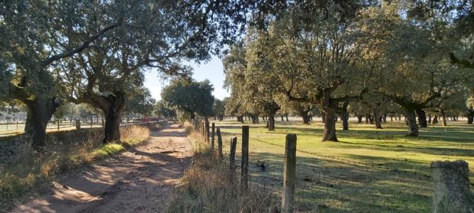 Le chemin menant à la ganaderia